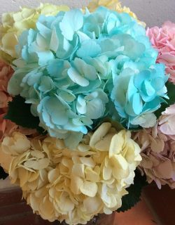Ligth colors painted hydrangeas